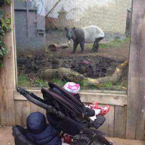 London Zoo visit